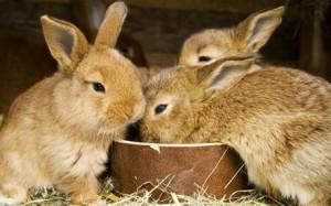 rabbit-10
